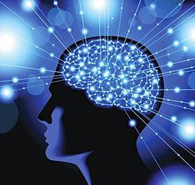 brain-illustration-blue